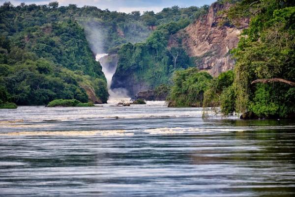 nile gorilla trekking impenetrable forest bwindi uganda