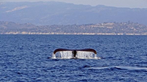 Channel Island california national park sponsorship