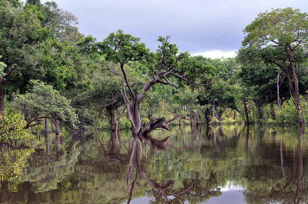 Rio Negro Brazil rain forrest
